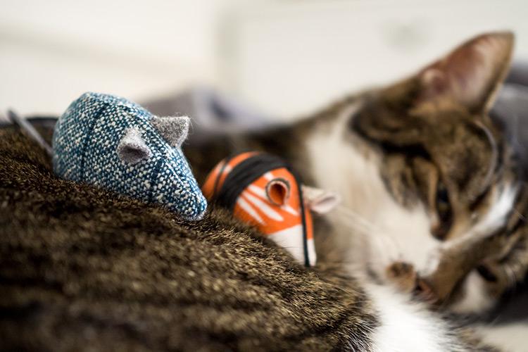 Wilde Maus - Katzenspielzeug selbst machen | Eigenbauer.com